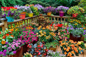 Ideas For Container Gardens - 12 ideas for flowering container gardens