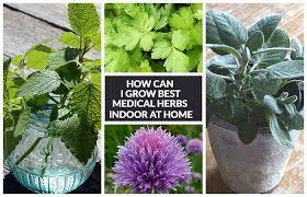 herbs indoors 12 best medicinal herbs indoors how to grow