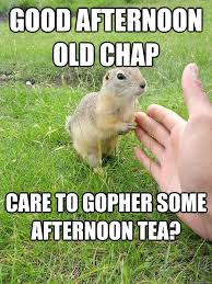Gopher Meme - gentleman gopher memes quickmeme