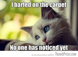 Sad Kitten Meme - sad cat is sad 25 hilarious first world problems cat meme