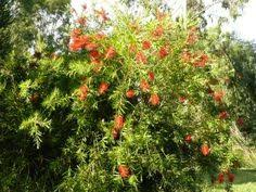 companion planting u2013 sustainable gardening australia u2022 sga
