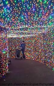 oregon zoo lights 2017 more zoo lights zoo lights portland or pinterest zoo