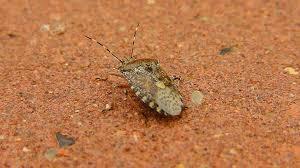 was ist das für ein insekt eine wanze oder was urlaub insekten insekt wanze natur kostenloses foto auf pixabay