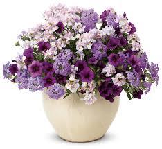 flower delivery near me pooh corner farm greenhouses florist bethel maine me 02417