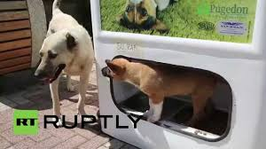 funny thanksgiving dog pictures turkey recycle a bottle feed a stray dog youtube