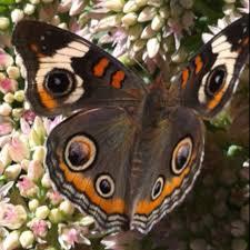 Indiana travel bug images 86 best northwest indiana memories images indiana jpg