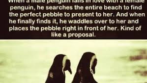 Cute Penguin Meme - cute animal meme archives page 3 of 27 funny animal photo