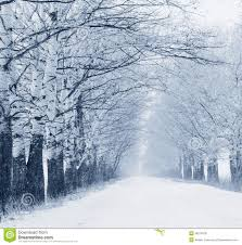 snowfall stock photo image of rime lonely snowflake 36278378