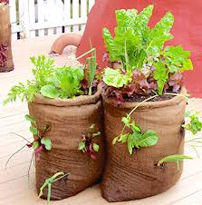 Vegetable Container Garden - wherever you find a sunny location you can grow vegetables