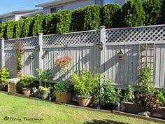 Fence Line Landscaping by This Fence Provides Privacy With The Extra Height Gained From The