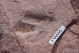 moab lions back priceless u0027 dinosaur track stolen near moab