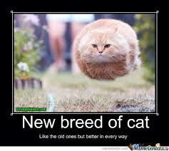 new breed of cat meme cat planet cat planet