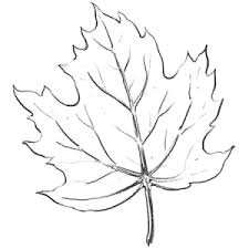 learn how to draw maple leaves with easy step by step drawing