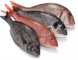 pesci alimentazione corpo perfetto pesce e dieta per dimagrire si deve mangiare pesce