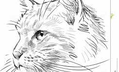 best 25 cat sketch ideas on pinterest how to draw cats cat