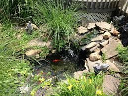 triyae com u003d fish dying in backyard pond various design