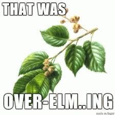 Tree Puns Tree Puns Botany Jokes Laughter