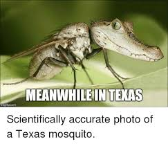 Meanwhile In Texas Meme - mgflip com meanwhile intexas scientifically accurate photo of a