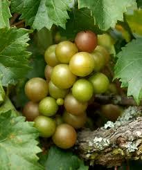 do your plants have gas in their tanks ison u0027s nursery u0026 vineyard