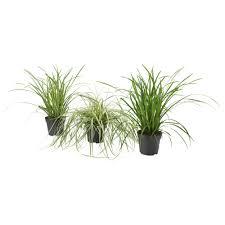plants u0026 cacti house plants u0026 potted plants ikea