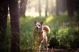 Dog Wisdom 6 Reasons Why I Wish I Was More Like My Dog Care