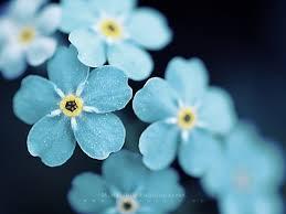 beautiful images of flowers qygjxz
