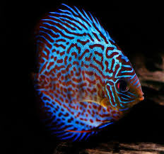 301 best aquarium images on fish aquariums aquarium