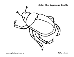 japanese beetle coloring