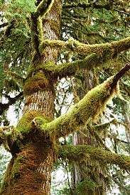 physical of moss on trees