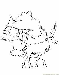 elk coloring pages contegri com