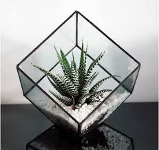 glass terrarium square