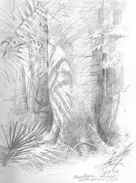 panama barro colorado island sketchbook 2013 u2013 drawing the motmot