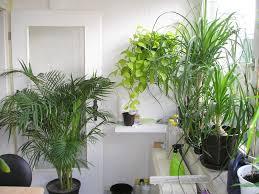pflanzen im schlafzimmer pflanzenfreunde - Pflanzen Für Schlafzimmer