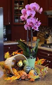 reasons you should give an orchid to your thanksgiving host