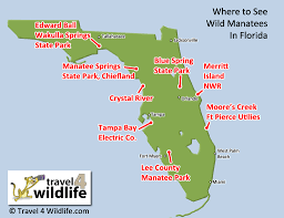 Miami Orlando Map by Where To See Manatees In The Wild Travel 4 Wildlife