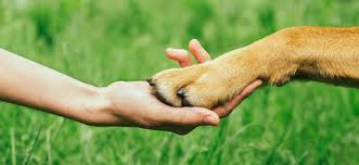 pet bereavement how to cope with the loss of a pet