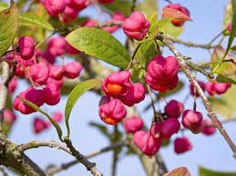 planting natives how to grow native hedges saga