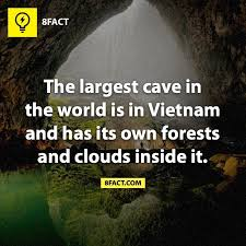 best 25 8fact ideas on facts interesting facts