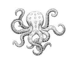 simple octopus sketch google search embroidery pinterest