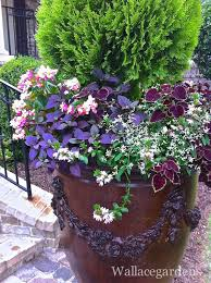Flowering Patio Plants 410 Best Container Garden Window Dress Images On Pinterest