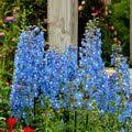 10 Perennials That Thrive In by 10 Perennials That Thrive In The Sun Perennials Drought