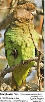 vital l full spectrum light for birds brown headed parrots beauty of birds