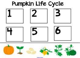 pumpkin life cycle for smartboard by smart kinder kids tpt