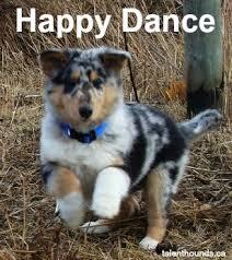 Dancing Dog Meme - happy dance talent hounds
