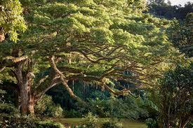 now you can vote for the european tree of the year