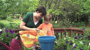 gardening projects for kids growing tabletop lettuce youtube