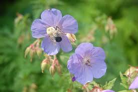 Best Fragrant Indoor Plants - fragrant houseplants for a nice smelling home simplemost