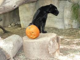 pumpkin bash reid park zoo