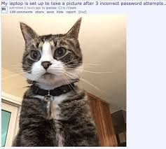 Memes Cat - 37 of the best cat memes the internet has ever made