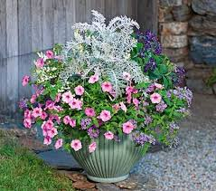 Fragrant Container Plants - 108 best container plants images on pinterest plants gardening